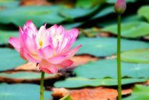 Buddha Buddies / Mindfulness meditation