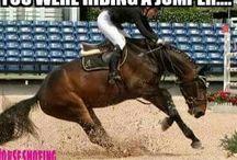 Horse citation
