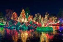 Tis the Season Holiday Lights / Tis the season of holiday lights!