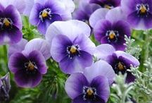 Perfectly Purple / Purple things.