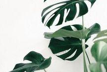 plantas / plantas, flores