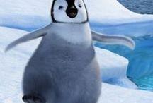 ~I Love Penguins~ / Penguins