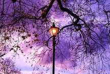 ~Streetlights~Farolas~ / Streetlights