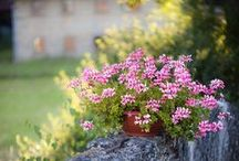 ~Fences, Gardens, Field flowers~Vallas, Jardines, Flores silvestres~ / Fences, field flowers