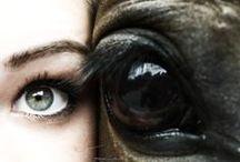 Horse photo inspiration