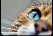 Cats / De dejlige katte ❤️