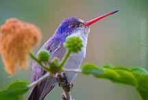 ~I Love Hummingbirds~ / Hummingbirds