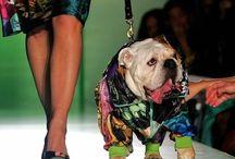 Dog Fashion Shows / Dog Fashion Shows