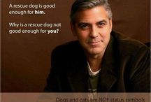 Action Sites for Animals / Donations sites and people doing Good Things