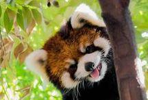 ❈ Cute critters ❈
