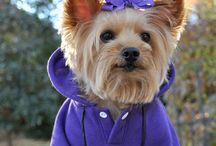 Fashionistas / Cute and Notable Fashionable pets