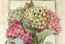 ✤ Florals ✤