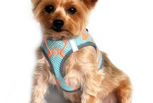 Accessories / Collars, Leashes