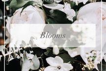 // Blooms //