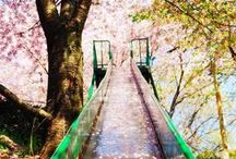Japan Op Haar Best / Via deze foto's willen we je de diversiteit en schoonheid van Japan laten zien <3