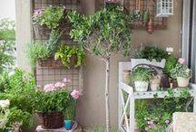 Gardening / stuff to make! / by Sprecasanti Rebecca