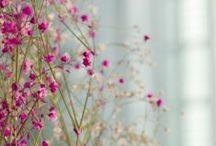 Flowers / by Nikki Robilliard