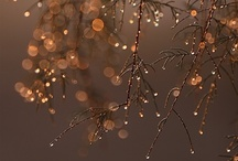 Let it snow / all things pretty wintery christmasy and sparkly  / by Nikki Robilliard