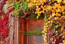 Garten Herbst / by Tanja Dirnberger