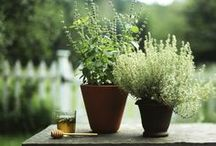 Romantic Country-house scenery / Everything around a country house lifestyle.