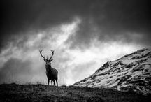 Stag on the Hill / Ros Cerf - in Breton means Stag on the Hill, the name of my home in Brittany