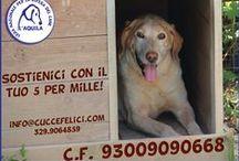 il Rifugio | le nostre campagne / campagne di informazione e sensibilizzazione  - information and awareness campaigns