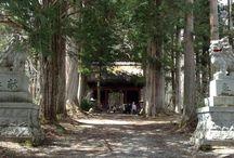 Cedar trees / Nagano prefecture