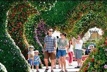 Miracle Garden blooms in the desert / Dubai Miracle Garden Tour by Funtours Dubai