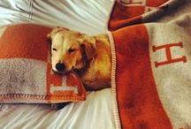 LDI :: Must Love Dogs