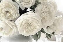 Wonderful in White / White plastic bags, White paper bags, white flowers, white decorations, white decor, white cake, everything we love that is white.  www.qispackaging.com.au