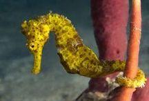Photo Favorites: 2014 / N2theBlue Scuba Diving St. Croix, US Virgin Islands 340-772-3483 Airport: STX no passports for USA Citizens