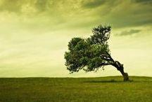 Ziemia i natura