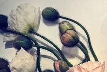 PlantS * FlorA * GardeN * RoślinY
