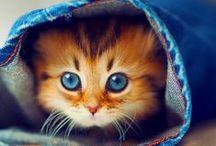 Kittens / Crazy Cute Kittens