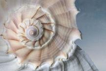 NEUTRAL ...White ... Earthy ... Cream ... Natural ... / by Arina Jansen van Vuuren