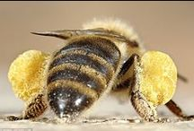 Bees / All things magical, interesting and inspiring about bees!