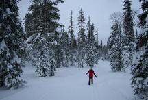 I love Lapland
