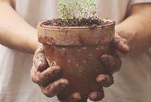 Garden / Ideas for outdoor gardening.