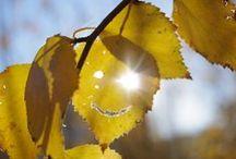 Осень зимняя Весна! / Осень - это сны листопада  Не отводи глаза, С листком танцует Колдунья Осень.