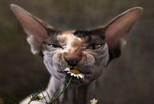 мур-мур Мняу.... / Кошки – венец творения, апогей ловкости и феерия очарования. Нет создания грациознее, изящнее и совершение.