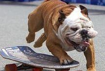 Собачья радость / Благодарность - это болезнь собак, не передающаяся человеку.