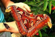 """PAPILONчики /  Гусеница, ставшая бабочкой, опровергает тезис: """"рожденный ползать летать не может""""."""