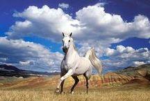 Лошадь — это поэзия в движении. / Лошадь гораздо щедрее, чем человек, одарена инстинктами и чувствами. Слышит лошадь лучше кошки, обоняние тоньше, чем у собаки, она чувствительна к ходу времени, к перемене погоды… Нет ей равного на Земле животного.