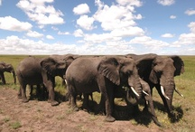Kenya! / Discover the safari life that you've only heard about through books and movies. Roam the African bush where much of the film 'Out of Africa' was set.