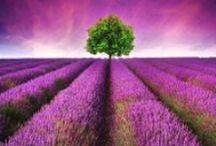 Peaceful Meditations / Meditations recorded at our live True Divine Nature gatherings. www.TrueDivineNature.com