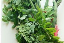 Healthy moringa