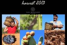 Our Harvest / Some moments of our 2013 harvest.