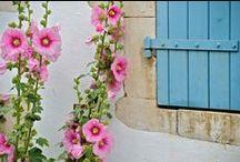 French Garden / Photos from our garden and kitchen garden