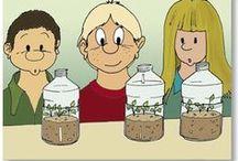 Les plantes / Des ressources et des outils pour étudier les plantes et leur reproduction.