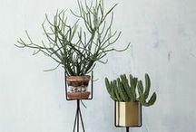 Bathroom Plants / A selection of plants that suit the humid bathroom environment.